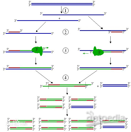 pcr的原理是什么_核酸pcr检测是什么