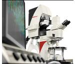 德國徠卡 共聚焦顯微鏡 TCS SP8 MP 多光子顯微鏡