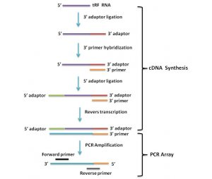 人癌症 miRNA PCR 芯片 human cancer miRNA pcr array