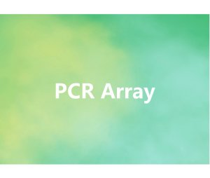 PCR Array