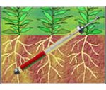 CI600植物根系生長監測系統(CI-690ROOTSNAP 根系分析軟件系統)