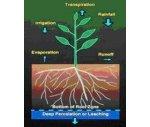 Eco-Watch 生態網絡監測系統