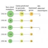癌細胞無所遁形!質譜技術直接檢測腫瘤新生抗原