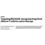 CRISPR篩選發現關鍵基因,讓抗腫瘤T細胞療法更持久